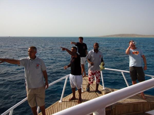Dolfijntjes te zien | Basyl | 22-03-2010