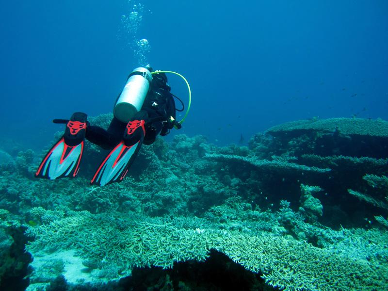 Tafelkoraal | Table coral | Acropora pharaonis | Shaab Sabina | 21-03-2010