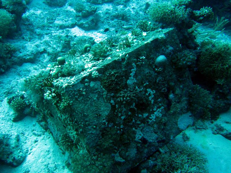 Watertank begroeid met koraal | Shaabrurh Umm Gamar | 21-01-2011