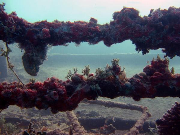 Wrakstukken | Balena | 14-09-2009